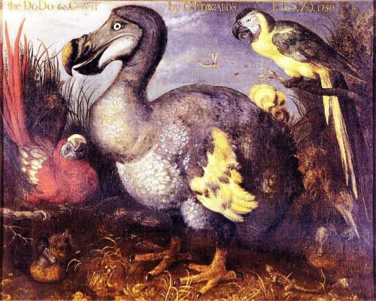 One of the most famous paintings of a dodo, from 1626. The image came into the possession of the ornithologist George Edwards, who later gave it to the British Museum.