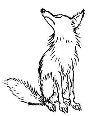 Resultado de imagem para porco espinho e raposa