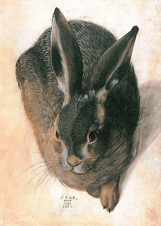 hare-1528-1