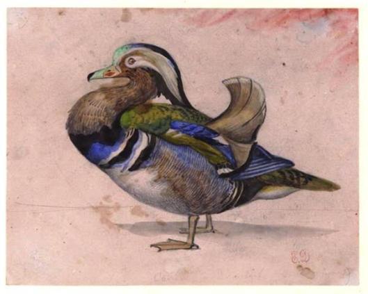 A Mandarin Drake, by Eugene Delacroix