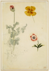 Study of Flowers, 1845-1850