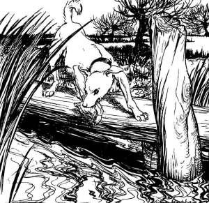 The Dog and Its Reflection,  Arthur Rackham, illustration