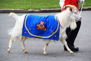 Baptiste, the Goat (Photo credit: Wikipedia)