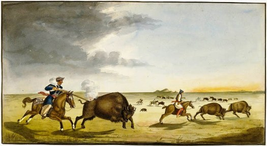 Buffalo hunting in the summer (1822)