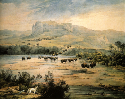 Herd of Bisons, on the Missouri River