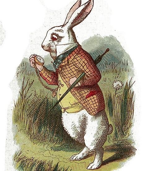 untitledwhie-rabbit-alice-in-wonderland